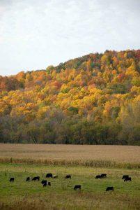 Kickapoo Valley in the fall