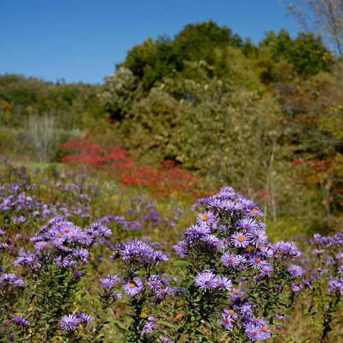 wildflowers in the driftless
