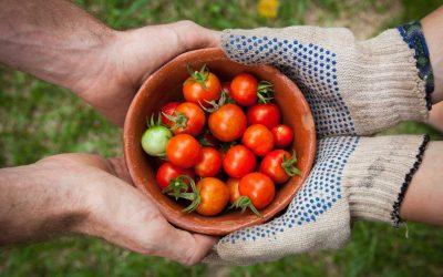Exploring The Driftless Region's Farmers Markets